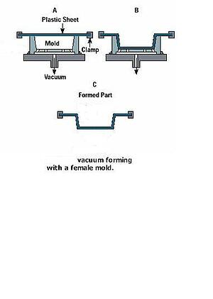 Vacuum Form Female